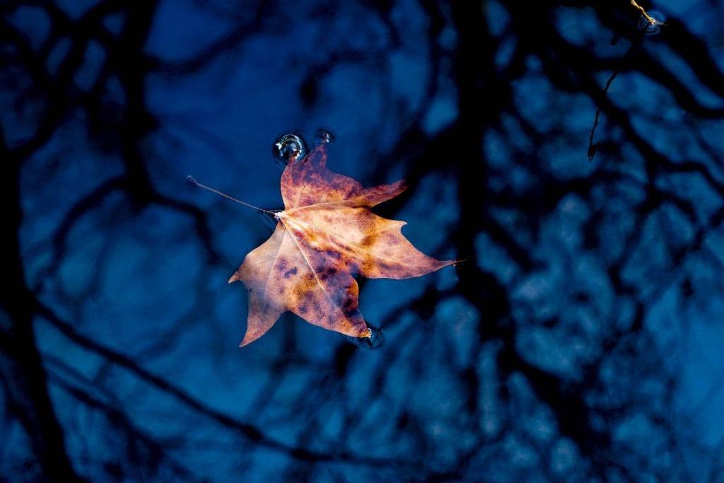 leaf-4214911_1920